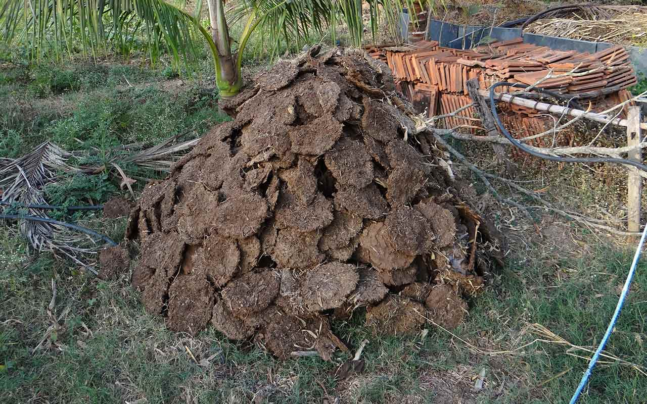 Cow Dung Business